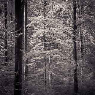 Frühlingswald in infrarot