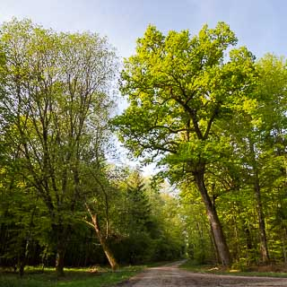 new leaves - fresh green in the spring forest