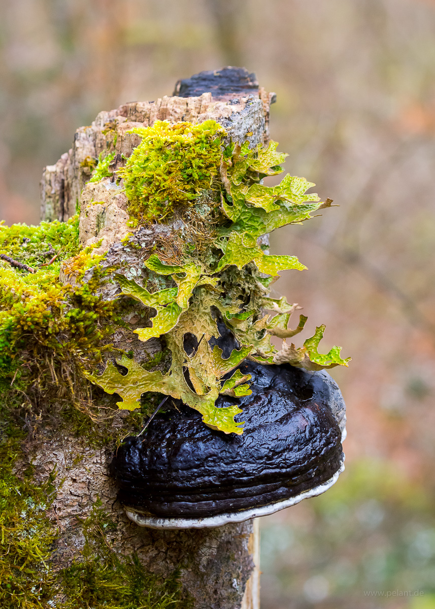 tree stump with fungus, moss, and lichen