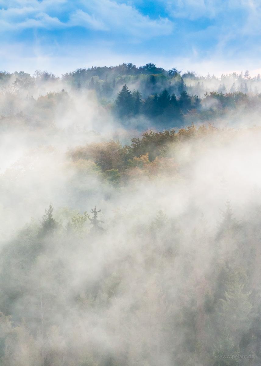 foggy forest (Schönbuch)
