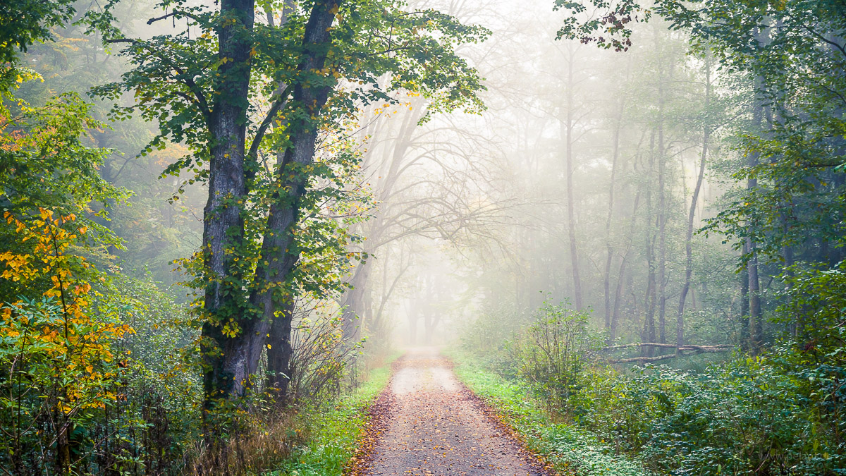 Schaichtalweg in fog