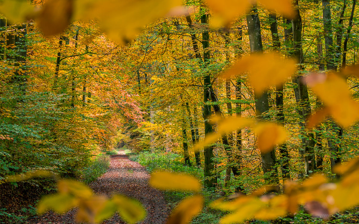 forest track through the Kirnbachtal in the Schönbuch in autumn