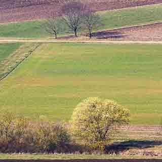 Blühende Weide in Feldlandschaft der Schwäbischen Alb