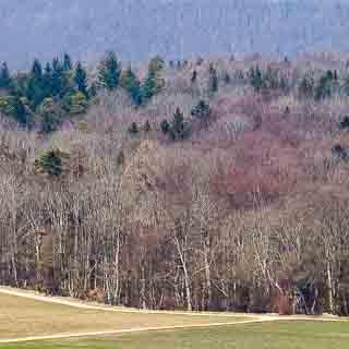 forest at the edge of the Schwäbische Alb