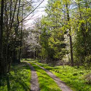 forest track in spring