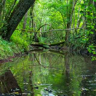 Schaich river, Schaichtal, Schönbuch forest