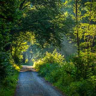 forest track in the Schaichtal in morning light