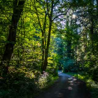 forest track through the Schaichtal, early morning