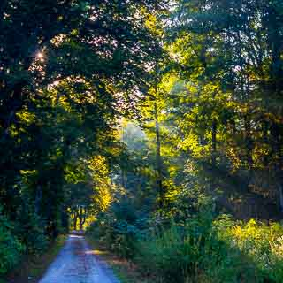 forest track through the Schaichtal in morning light