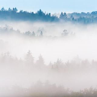 fog in the Schönbuch forest