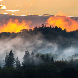 fog glowing in the last sunrays over the Schönbuch forest