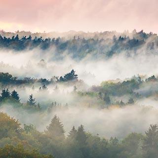 fog over the Schönbuch forest in the evening