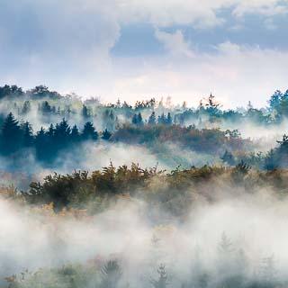 fog in the Schönbuch forest in the evening