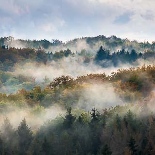 fog covered Schönbuch forest