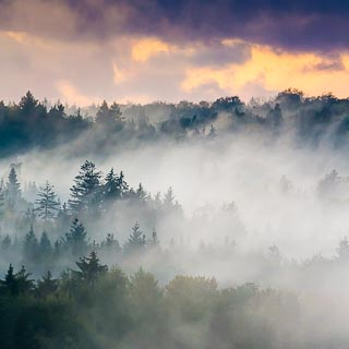 foggy forest in the evening with clouds in sunset colors