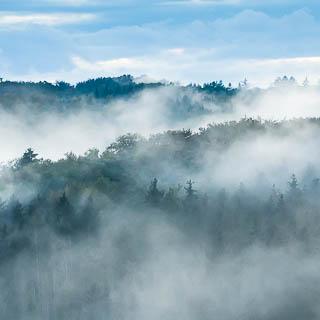 Schönbuch forest covered in fog at dusk