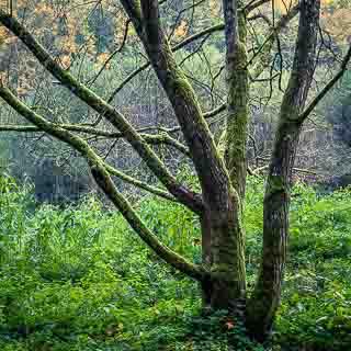 tree trunk in the Schaichtal valley