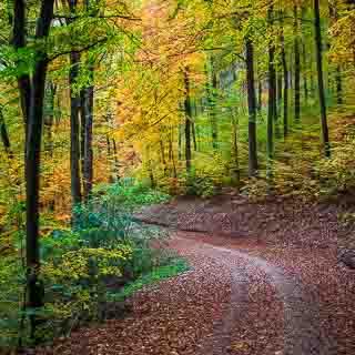 forest track in autumn at the edge of the Schwäbische Alb