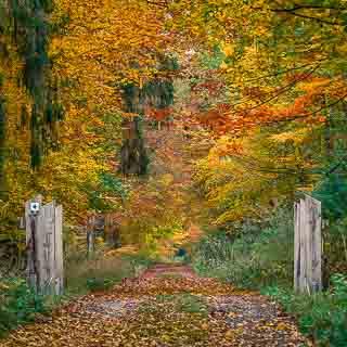 forest track with bridge in autumn in the Kirnbachtal (Schönbuch)