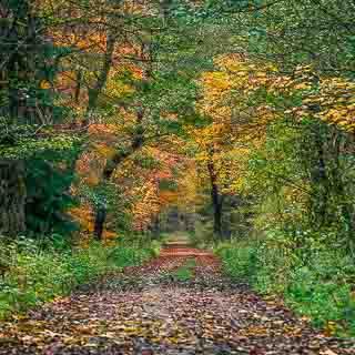 forest track through the Kirnbachtal (Schönbuch) in autumn