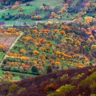 Streuobstwiese (orchard) at the edge of the Schwäbische Alb in autumn
