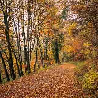 forest track through the Schaichtal (Schönbuch) in autumn