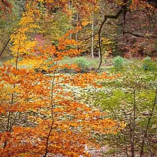 Schlüsselsee (Schaichtal) in autumn