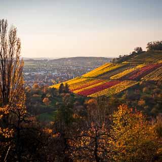 Metzingen Weinberg in autumn