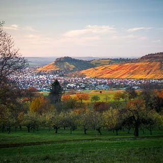 orchards and view of the vineyards of Metzingen/Erms in autumn