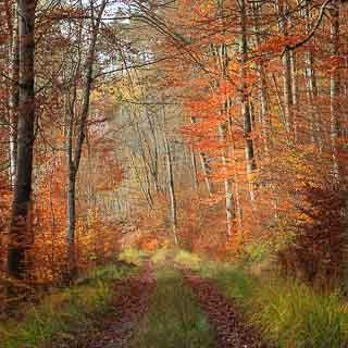 autumn forest track in the Schönbuch forest