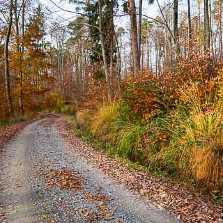 forest track in autumn in the Schönbuch forest