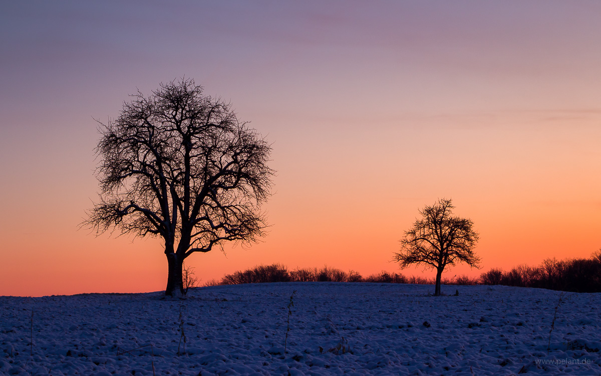 dawn with fruit trees on the fields